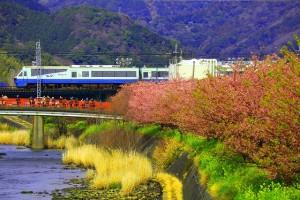 桜と電車0024