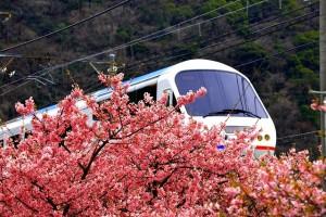 特急電車と桜0036