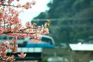 桜と電車0012