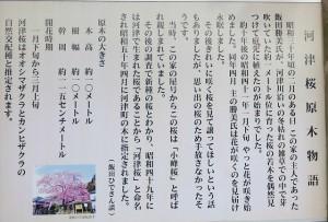 河津桜原木物語