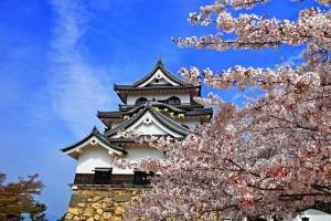 彦根城さくら絵画調