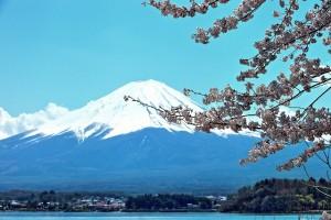 絵画調桜の富士