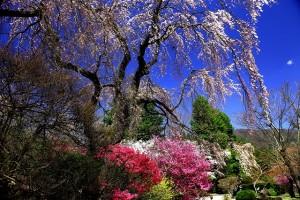 富士ホテル前の庭