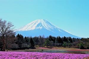 富士山とさくら草HDR