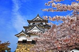 彦根城さくらHDRN