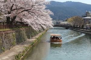 京都疎水平安神宮IMG_0021
